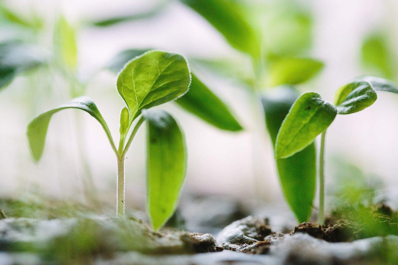 Dubbelgroen: Zaaien is oogsten