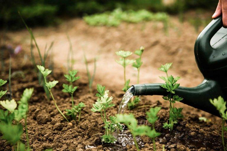 Hoe maak je de tuin lenteklaar?