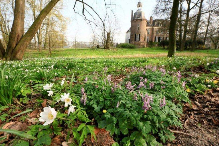 Natuurmonumenten zoekt vrijwilligers voor onderhoud voorjaarbloeiers
