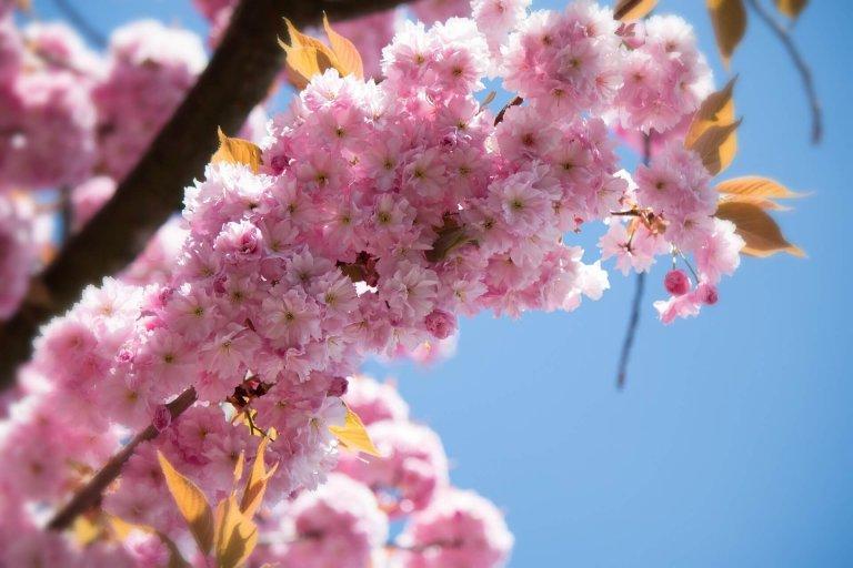 Dubbelgroen: Prunus of Malus