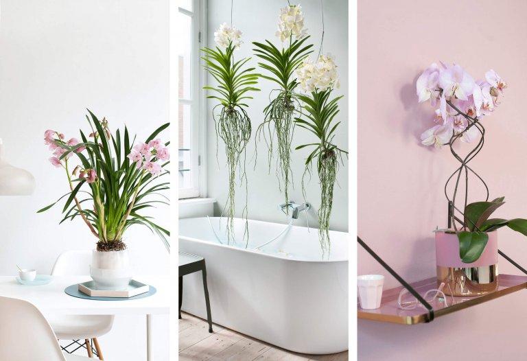 Je orchidee in 3 stappen happy & fit!