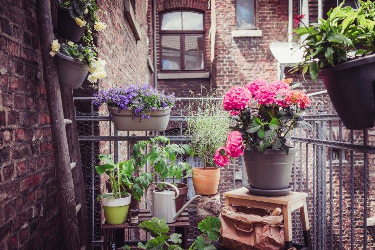Meer planten op de Nederlandse balkons- en (dak)terrassen in 2018