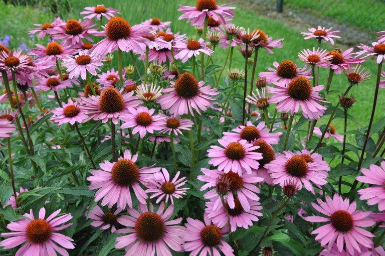 Tip: Vaste planten voor een kleurrijke tuin!