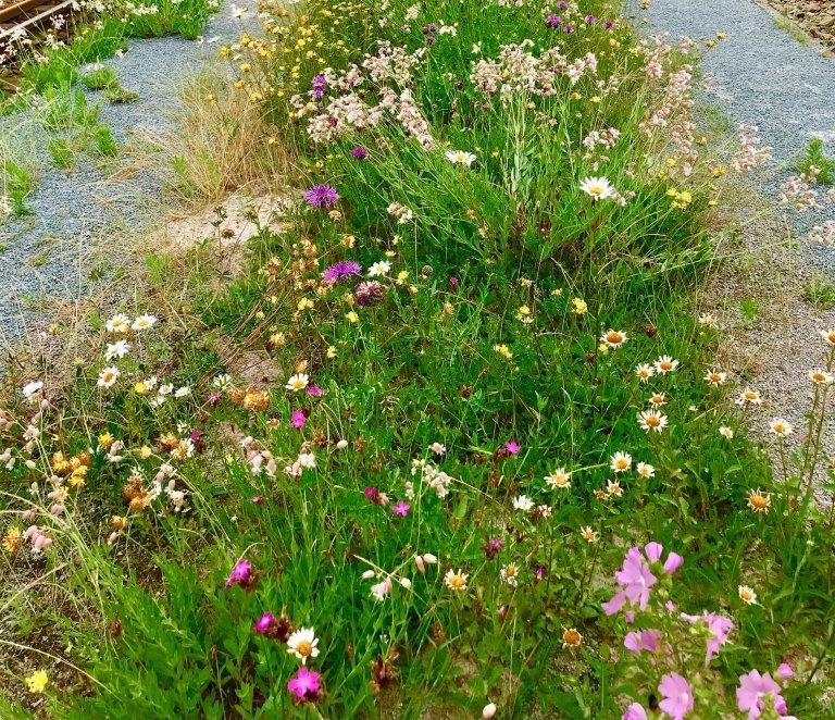 Dubbelgroen: Wilde bloemen
