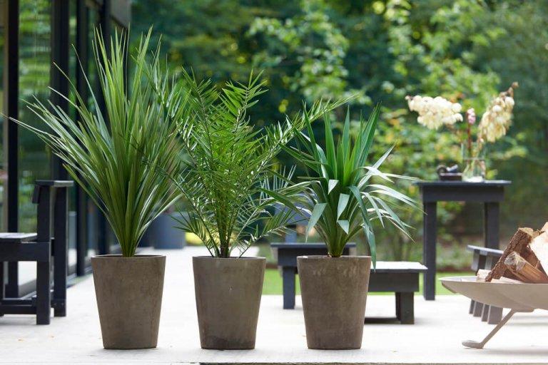 Tuinpalmen: Tuinplanten van de maand september