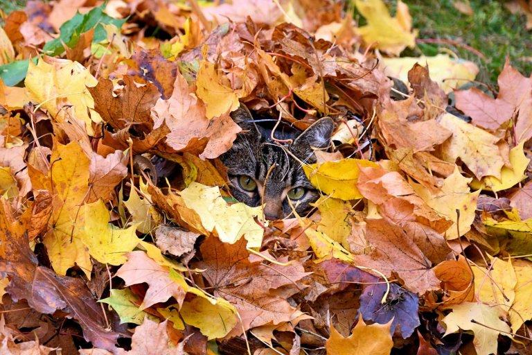 Inspiratie voor in de herfst