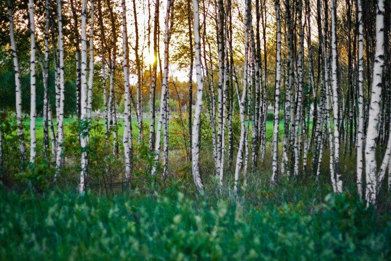 Bomen met mooie basten
