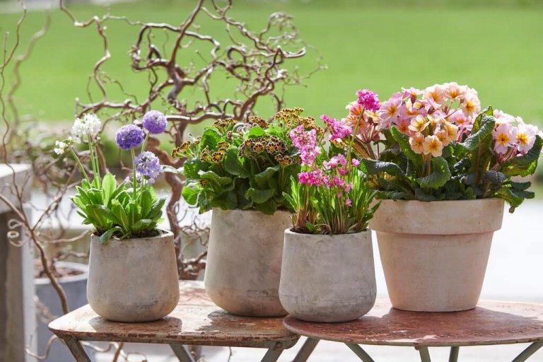 Voorjaarsverrassingen: Tuinplanten van de maand februari