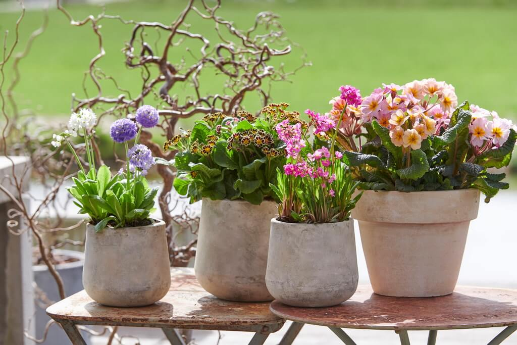 Voorjaar bloemen