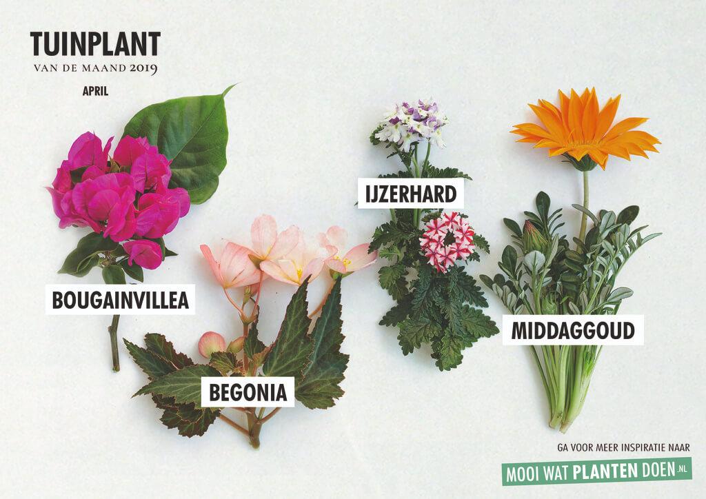 Tuinplant april