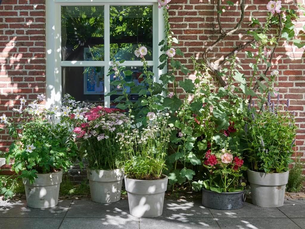 Planten bloemen voor bijen