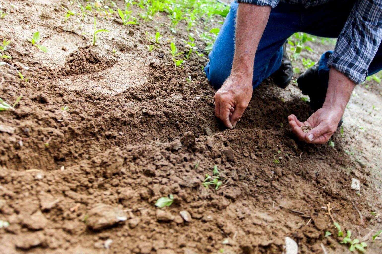 Tuinieren is gezond ouder worden