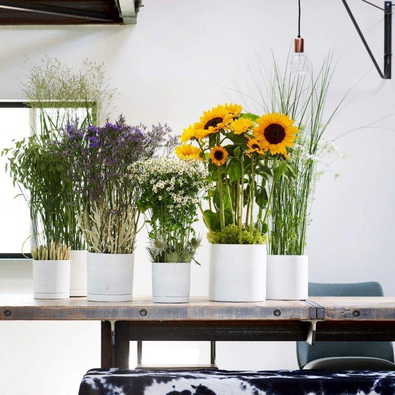 Bloemen van de maand juli: zomerbloemen