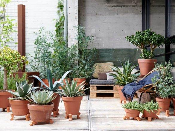 Zorgeloze vakantie planten