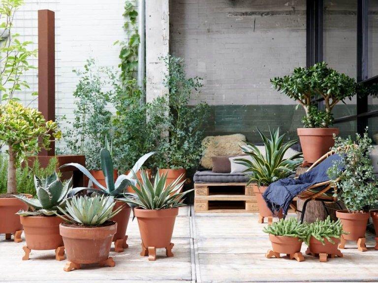 Zorgeloze Zomertijd: tuinplanten van de maand augustus 2019