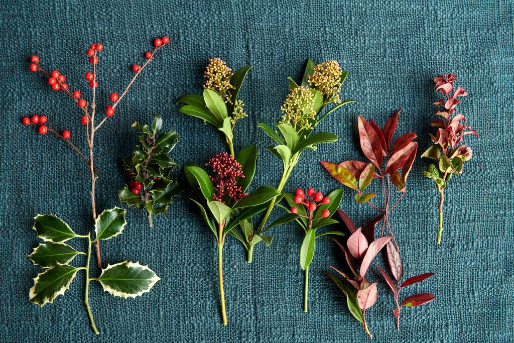 Rode tuinplanten